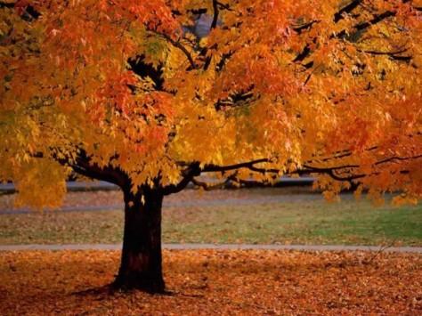 fall-foliage-